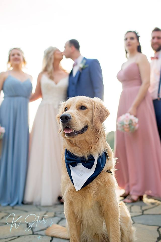 wedding-dog-bride-groom-kiss-southern-wedding